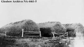 Hay stacks on Peigan reserve, southern Alberta.