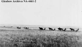 Haymaking on Peigan reserve, southern Alberta.