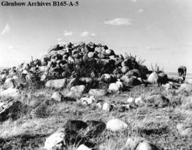 Majorville Cairn south of Bassano, Alberta.