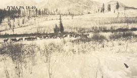 A herd of elk, which had been shipped in by rail and fed by the Federal Government, Jasper Nation...