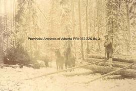 Loggers and a team of horses, Ingolf, Ontario