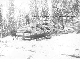 Horses pulling a sledge piled with logs, Ingolf, Ontario