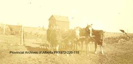 A settler's team between Cleverville and Thigh Hill, Alberta