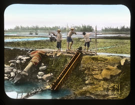 [Workers in field with irrigation]