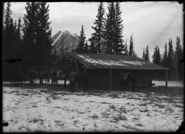 Barnes cabin at Kootenay Plains, Elliott Barnes on step, Elliott Peak in background