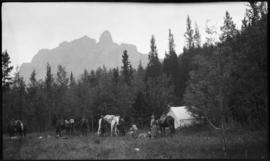 Men packing horse camp near Castle Mountain