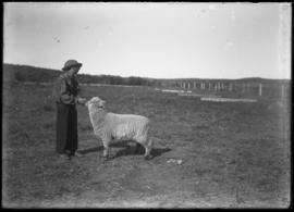Findlay Barnes with sheep at Jumping Pound