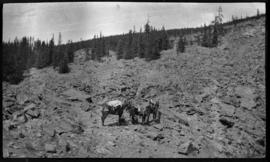 Rider leading packhorse and saddlehorse on rockslide
